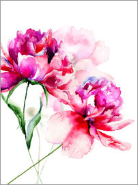 Beautiful Peony flowers