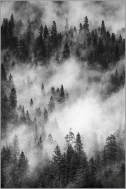 Judith Zimmerman - Black and white pine forests