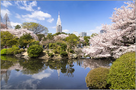 Jan Christopher Becke - Shinjuku gyoen im Frühling in Tokio, Japan