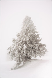 Peter Wey - Single snow covered tree in thick fog in winter  Rigi, Switzerland