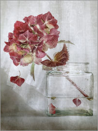 Mandy Disher - Still life with Hydrangea