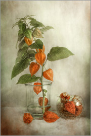 Mandy Disher - Stillleben mit Physalis