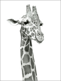Ashley Verkamp - Studie einer lachenden Giraffe