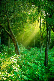 Sunlight rays in the rain forest in Sri Lanka