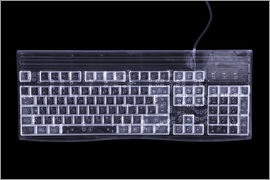 Mark Sykes - Tastatur, X-ray