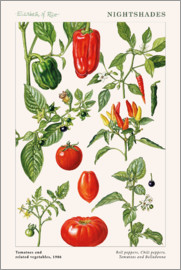 Elizabeth Rice - Tomatoes and related vegetables, 1986