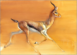 Mark Adlington - Trabende Gazelle