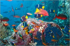 Paul Souders - Galapagos Islands - the underwater world of colorful tropical fish