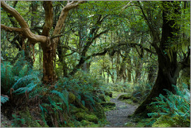 Peter Wey - Primeval forest on kepler track, fiordland, new zealand