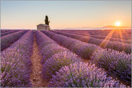 age fotostock - Valensole Plateau, Provence, France. Sunrise in a lavender field in bloom with lonely rural house an