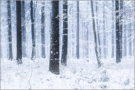 Jan Christopher Becke - Verschneiter Wald im Winter in Skandinavien