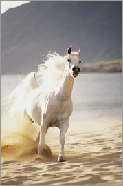 Vince Cavataio - White Horse in the morning light on the beach