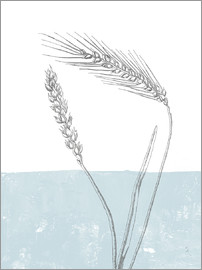 Sarah Adams - Wheat