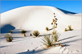 Bernard Friel - White Sands Nationales Naturdenkmal - Querdünen und Soaptree Yucca