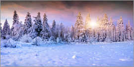 winter sunrise in the mountain forest