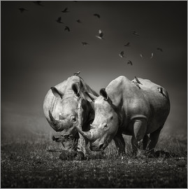 Johan Swanepoel - Two Rhinoceros with Birds
