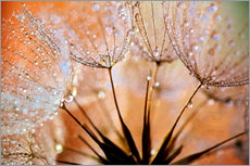 Wandsticker  Pusteblume orange Light - Julia Delgado