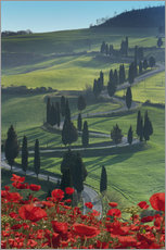 Angelo Cavalli - Winding road and poppies, Montichiello, Tuscany, Italy, Europe