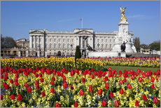 Wandsticker  Buckingham Palace and Queen Victoria Monument with tulips, London, England, United Kingdom, Europe - Stuart Black