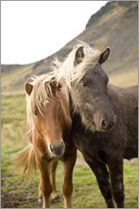 Wandsticker  Horses, South Iceland, Northern Europe