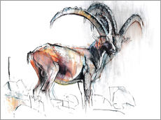 Gallery Print  Steinbock - Mark Adlington