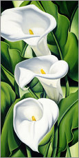Gallery Print  Lilien - Catherine Abel