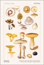 Wandaufkleber  Mushrooms and Truffles - Elizabeth Rice