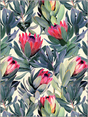 Gallery Print  Gemalte Proteas - Micklyn Le Feuvre
