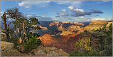 Gallery Print  Grand Canyon mit knorriger Kiefer - Michael Rucker