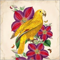 Gallery Print  Oh My Parrot V - Mandy Reinmuth