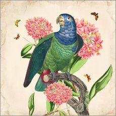 Gallery Print  Oh My Parrot IV - Mandy Reinmuth