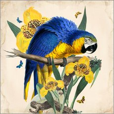 Gallery Print  Oh My Parrot IX - Mandy Reinmuth