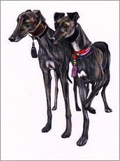 Gallery Print  Brindle Windhunde - Jim Griffiths