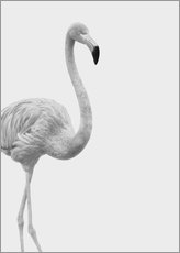 Gallery Print  Flanierender Flamingo - Finlay and Noa