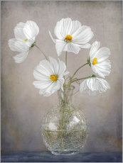 Gallery Print  Cosmos - Mandy Disher