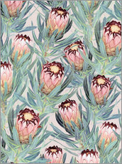 Gallery Print  Pale Painted Protea Neriifolia - Micklyn Le Feuvre