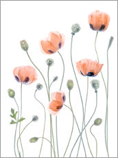 Wandaufkleber  Poppy Poesie - Mandy Disher