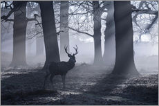 Gallery Print  A male red deer stag waits in the early morning mists of Richmond park, London. - Alex Saberi