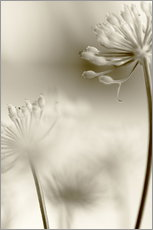 Gallery Print  Softly - Evelyn Meyer