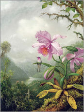 Wandsticker  Kolibri thront auf einer Orchidee - Martin Johnson Heade