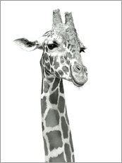 Gallery Print  Studie einer lachenden Giraffe - Ashley Verkamp
