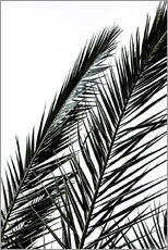 Gallery Print  Palm Leaves - Mareike Böhmer Photography