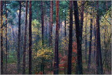 Gallery Print  Bunter Herbstwald - Mark Scheper