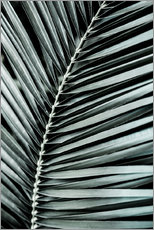 Gallery Print  French Palms 3 - Mareike Böhmer Photography