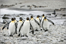 Gallery Print  Pinguine am Strand - ES Pictures