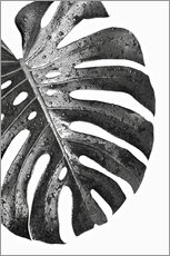 Gallery Print  Schwarze Monstera 01 - Art Couture