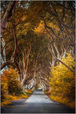 Premium-Poster Dark Hedges in Irland