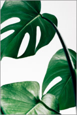 Premium-Poster  Monstera - Art Couture