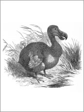 Holzbild  Dodo - Wunderkammer Collection