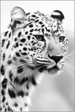 Premium-Poster  Jaguar - Art Couture